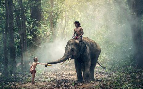 सपने में हाथी मस्त देखना