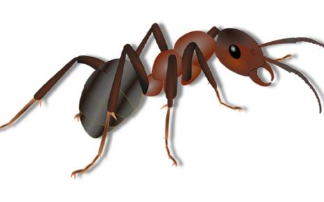 सपने में चींटी देखना