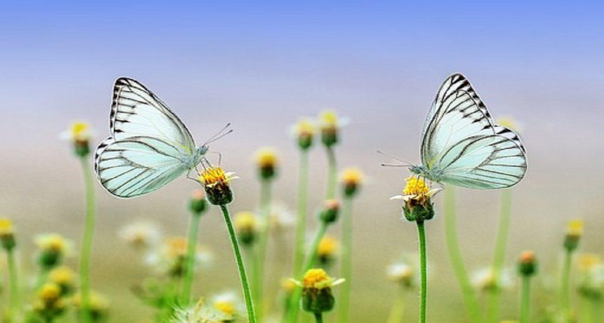 सपने में तितली देखना