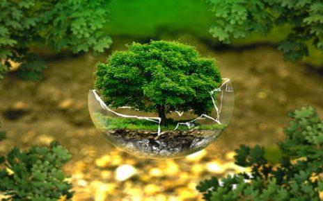 सपने में पेड़ पौधे देखना