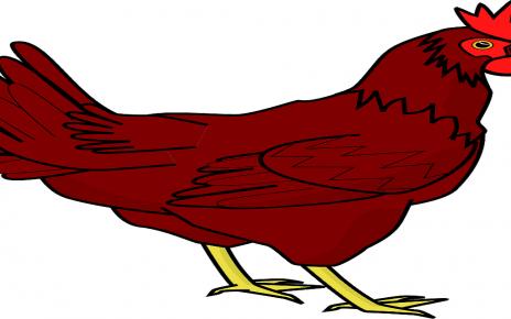 सपने में मुर्गी देखना
