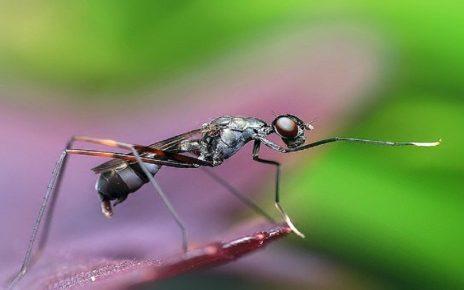 सपने में बहुत सारी चींटी देखना