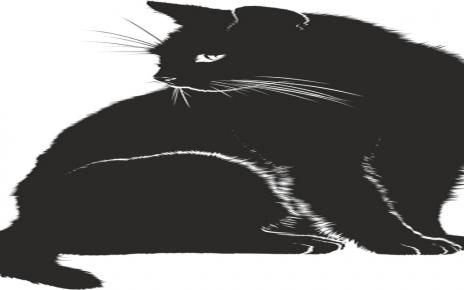 सपने में काली बिल्ली देखना