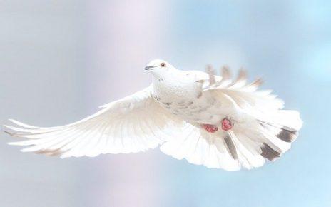 सपने में सफेद कबूतर देखना