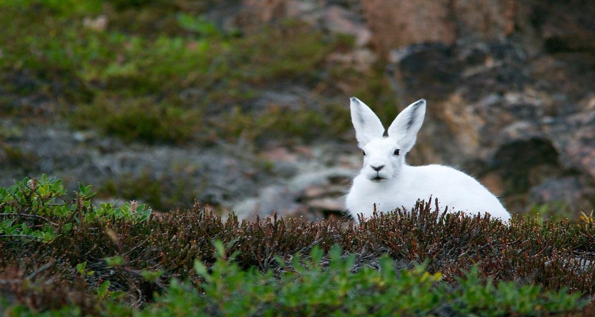 सपने में खरगोश देखना