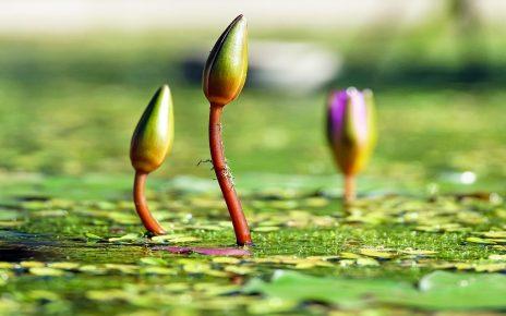 सपने में फूल की कली देखना