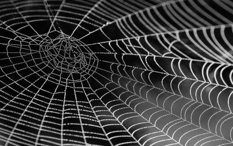 सपने में मकड़ी का जाल देखना