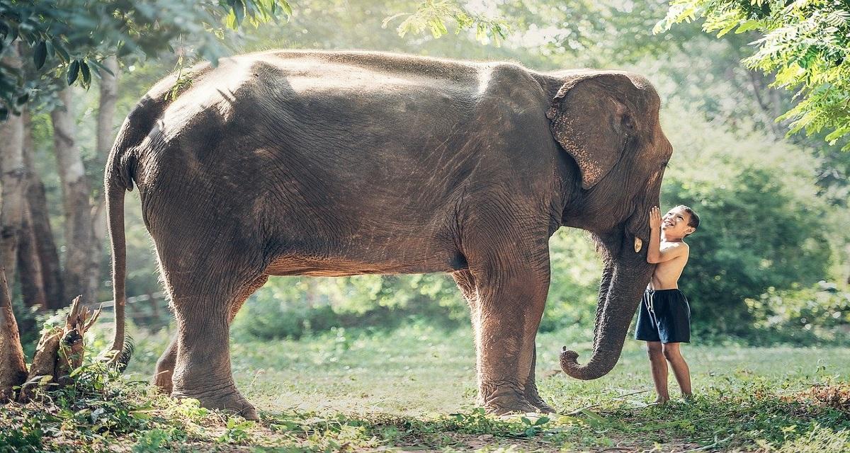 सपने में हाथी दिखाई देना