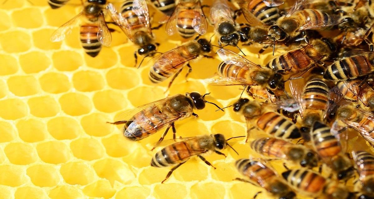 सपने में मधुमक्खी देखना