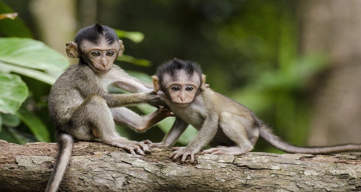 सपने में बंदर को देखना
